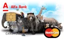 Alfa-Bank Cards