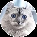 CatsBySmol