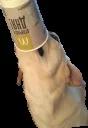 Dog's mood