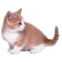 somecats