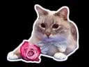 The cat Jazz