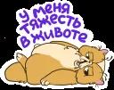 Кот ленивец © Александр Жданов @TuristasTV