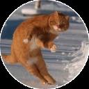 catsbySmol2