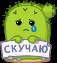 Кактус Коля
