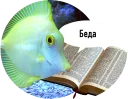 https://tgram.ru/wiki/stickers/imagepng/readfish/readfish_6.png