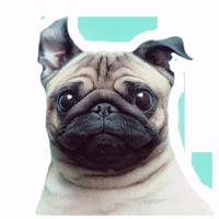 Meet The Pugs ( @Perkovec )