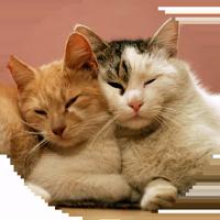 Котиковы