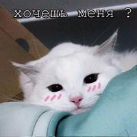 Мурлыки