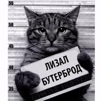 Кот Рецидивист
