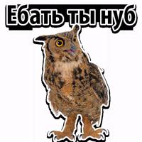 🦉Совиный Сленг @TuristasTV