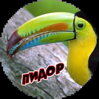 Злые Птицы  - part 1