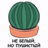 eto kaktus