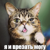 Lil_Bub