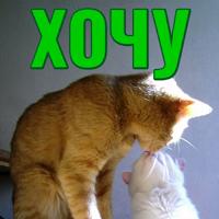 Моя любимая Кошка