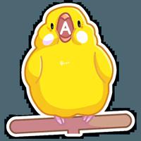 Попуги :: @stickroom