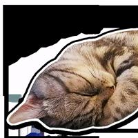 sceptical_cat