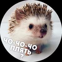 🦔 Hedgehog memes @lennysticker