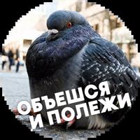 🐓 Птицы-хуицы @lennysticker