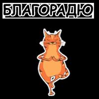 Йога с Котом и Лисичкой @Samopoz