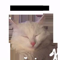zalupa_kitty