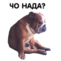Zhora Only Nuce Sticker Pack 0.1